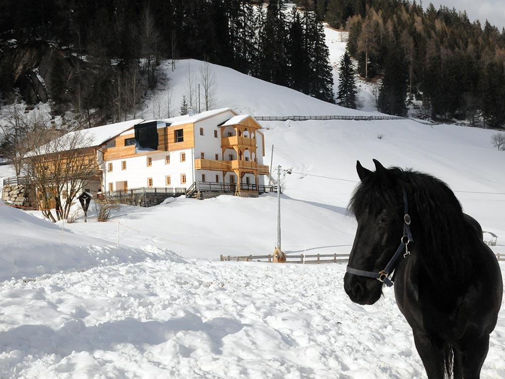 reiterhof-reitunterricht-urlaub-pferd-suedtirol-maneggio-cavallo-vacanza-lezioni-corsi5