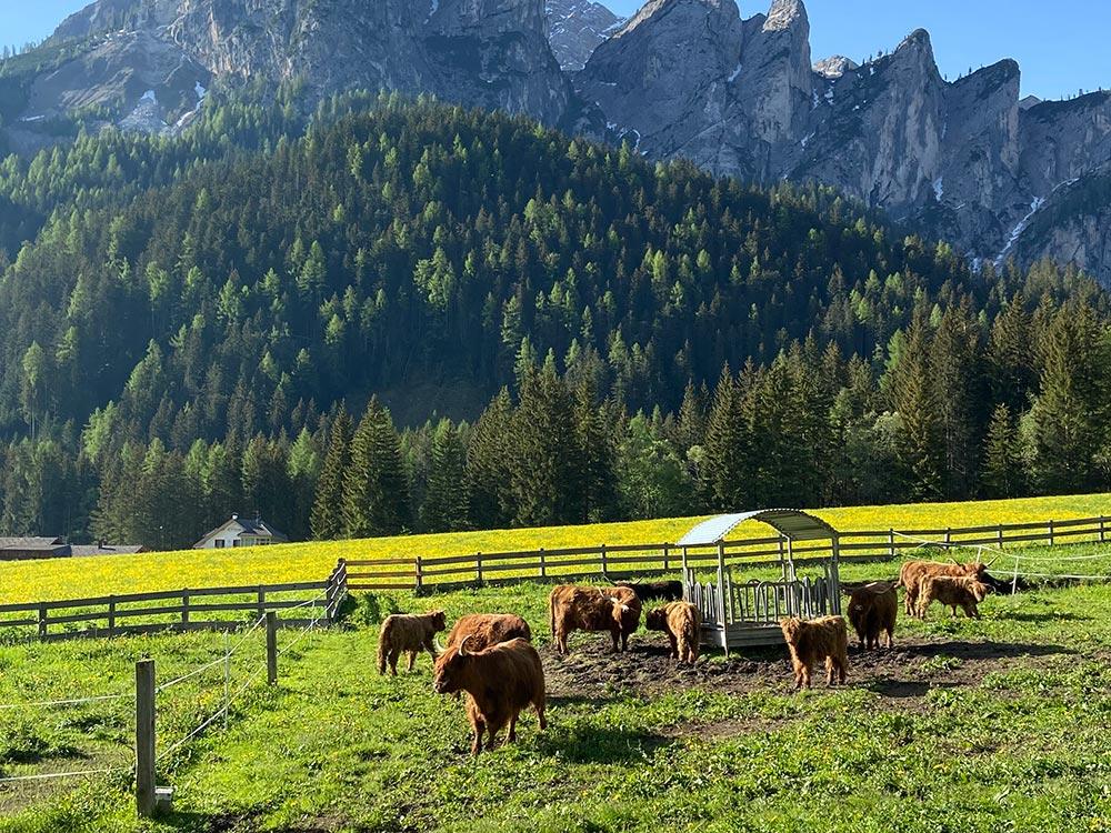 urlaub-zimmer-frühstück-bauernhof-pragser-wildsee-vacanza-maso-lago-di-braies-rooms-breakfast-farm-holidays-lake6